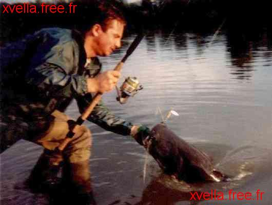 Xavier, Wels Catfish
