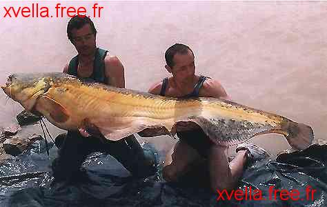 Claude Valette, Wels Catfish