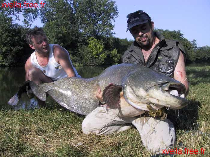 Jerome Brise, Wels Catfish