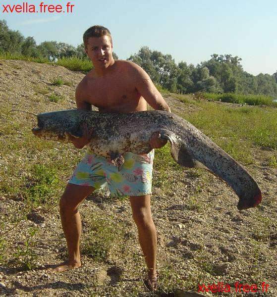 Popof 21, Wels Catfish