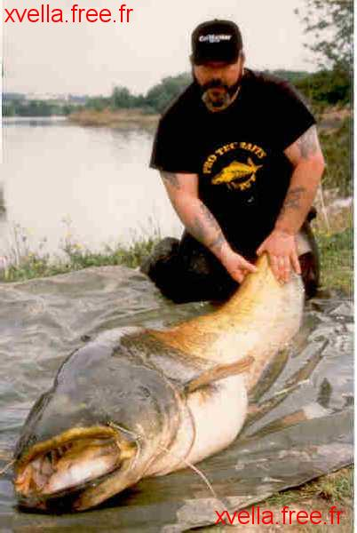 Big Ron, Wels Catfish