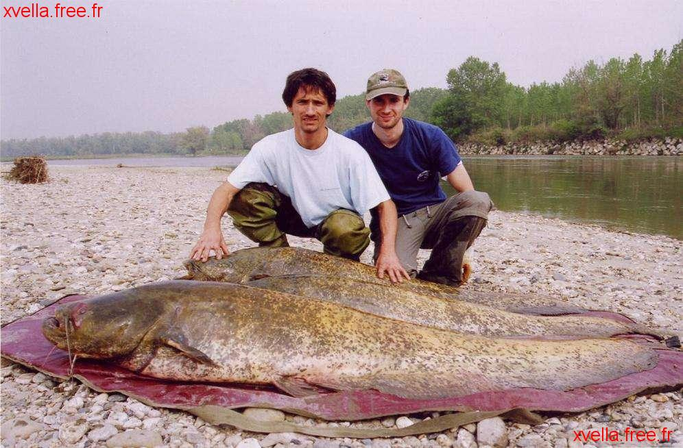 Luca, Wels Catfish
