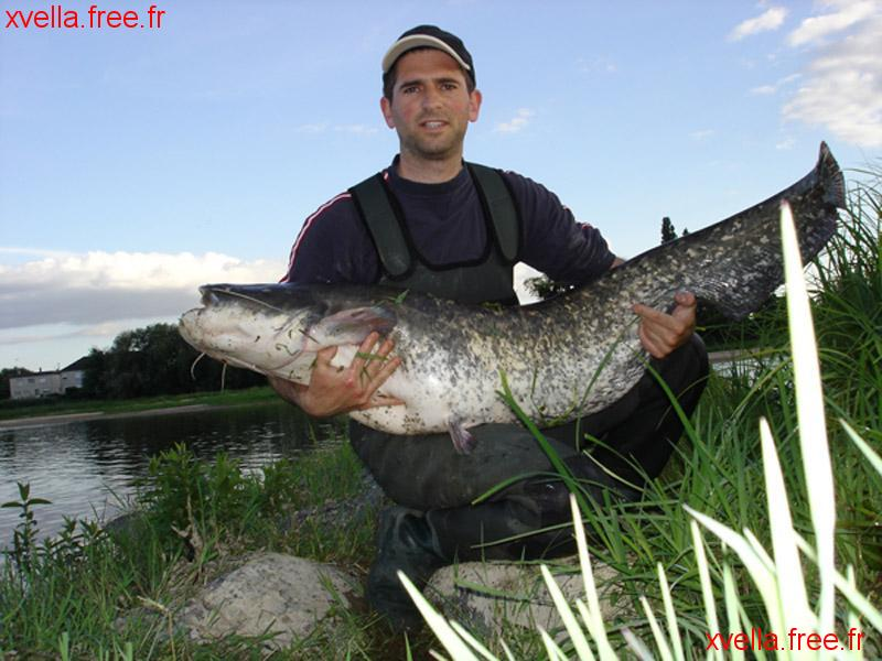Seb 49, Wels Catfish