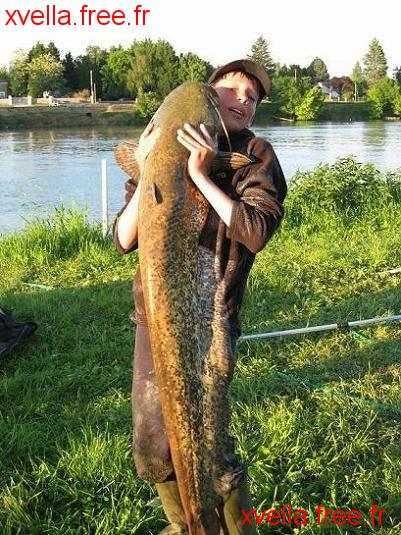 Volo, Wels Catfish