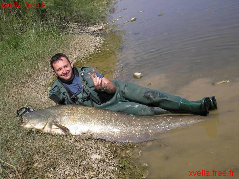 Ice, Wels Catfish