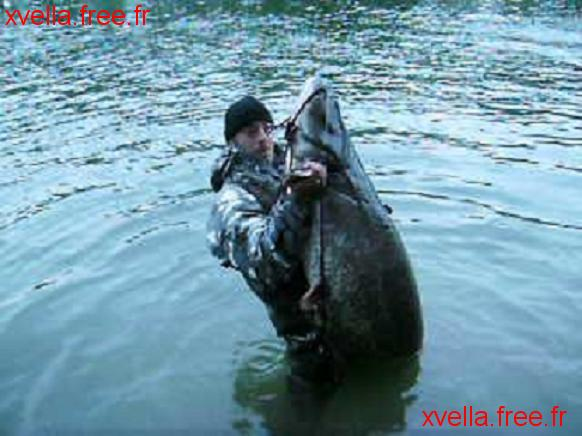 Marc Brune, Wels Catfish