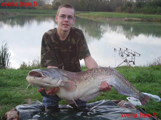 Djo, Wels Catfish