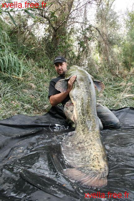 Jerome Pinot, Wels Catfish