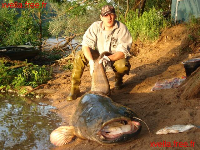 Mickey1, Wels Catfish