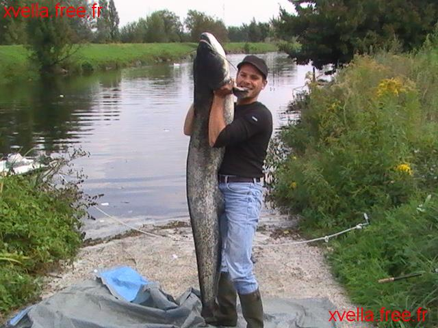 Greg42, Wels Catfish