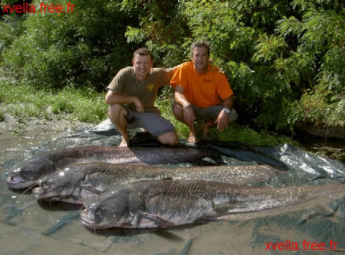 Lio, Wels Catfish
