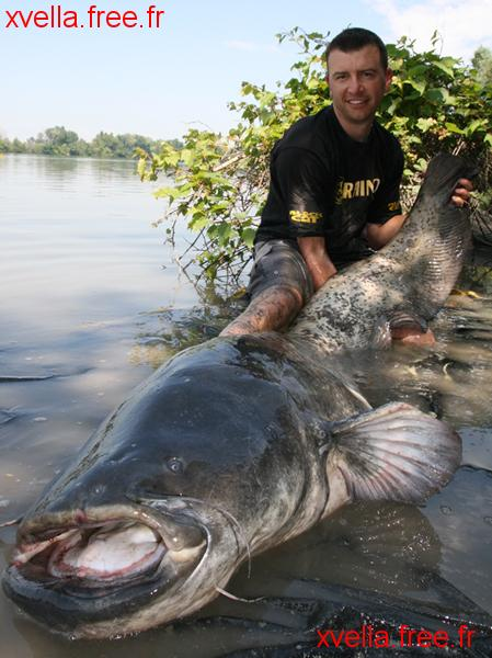 Roma, Wels Catfish