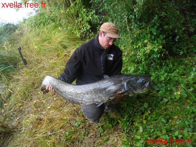 Damien 71, Wels Catfish