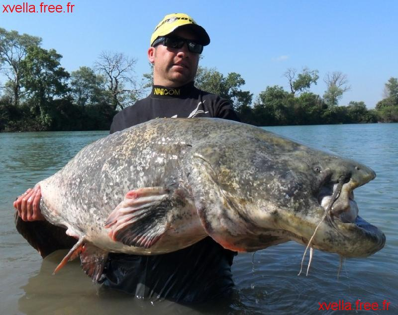 Seb71, Wels Catfish