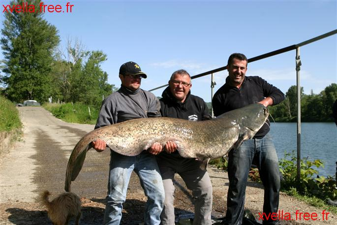 David0475, Wels Catfish