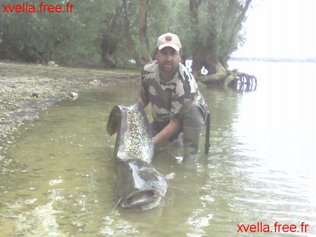 Miguel 51, Wels Catfish
