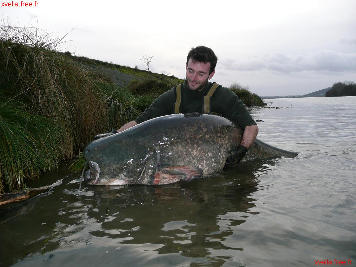 Vince, Wels Catfish