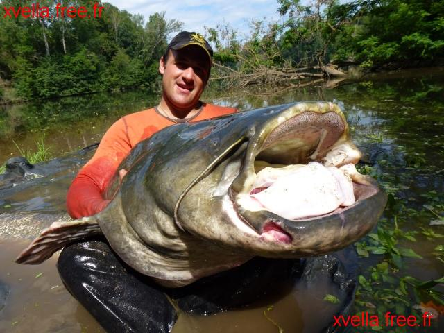 Yonath, Wels Catfish